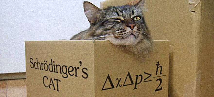 Schrodinger's Brexit and the Paranoia Factor