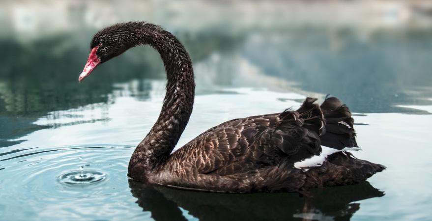 "Alpari Sponsors Seminars With ""Black Swan"" Author Nassim Taleb"