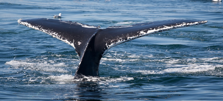 Whale Movement Detected: 18,000 Bitcoins Received by BitMEX